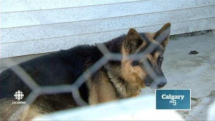 Dog seized from Calgary house after complaints of pet neglect by neighbours.